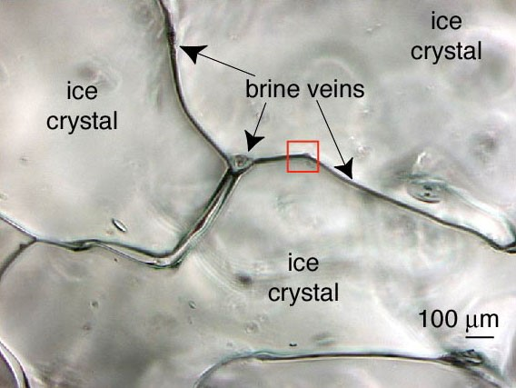Figure 1: An actual photo of brine channels within sea-ice [Junge et al., 2001, Annals of Glaciology]