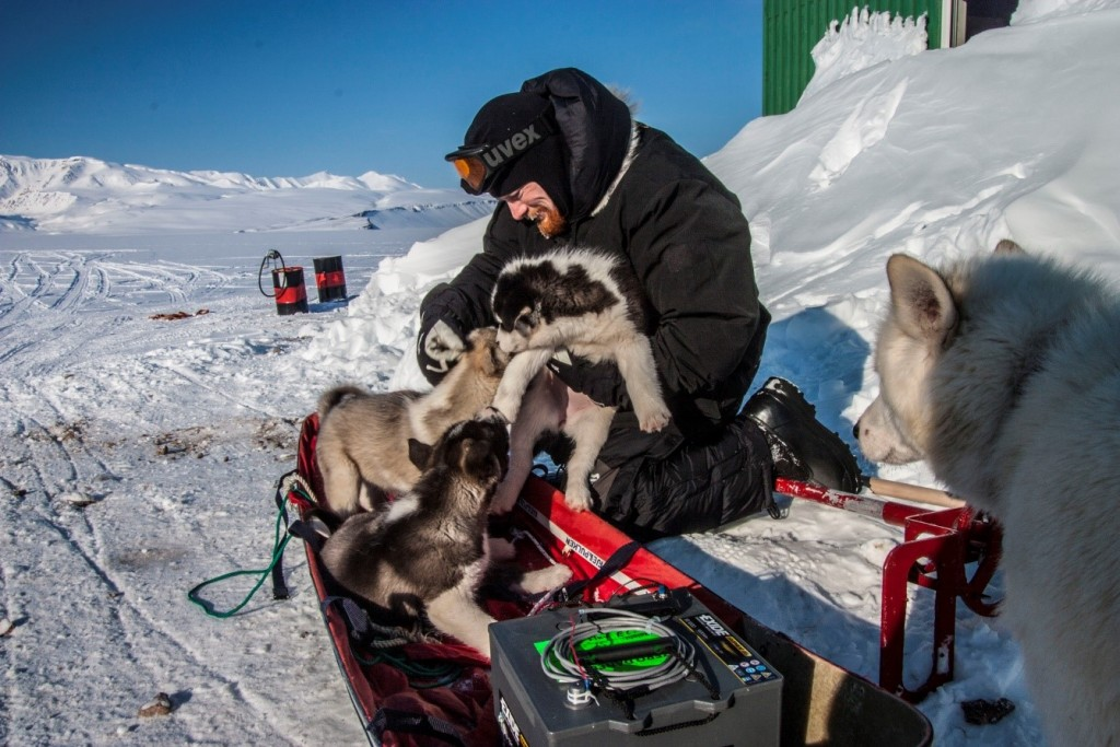 Figure 4: An unexpected challenge during fieldwork: invasion by sled dog pups. Photo: Karl Attard.