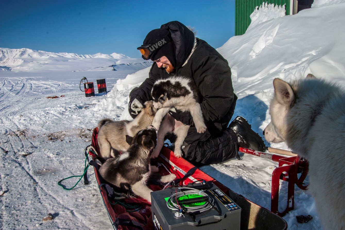 Cryospheric Sciences 2015 March Snow Dog Hd Wiring Harness Figure 4 An Unexpected Challenge During Fieldwork Invasion By Sled Pups Photo