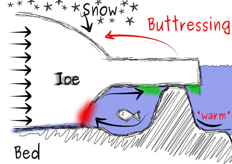 Figure 6: Schematic representation of ice-shelf buttressing by a local pinning point (source: courtesy of R. Drews ).