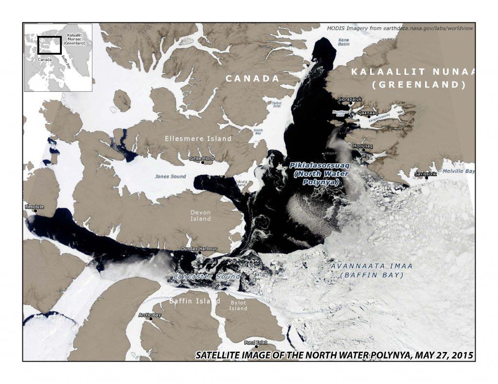 What a polynya looks like, from MODIS satellite: (https://modis.gsfc.nasa.gov/)
