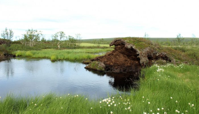 Image of the Week – Permafrost features disappearing from subarctic peatlands