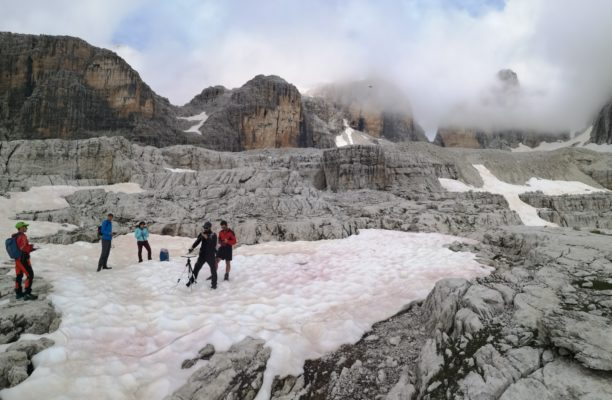 Cryo-Adventures – Hunting snow algae in the Alps