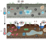 It's getting hot in here: Ancient microbes in thawing permafrost