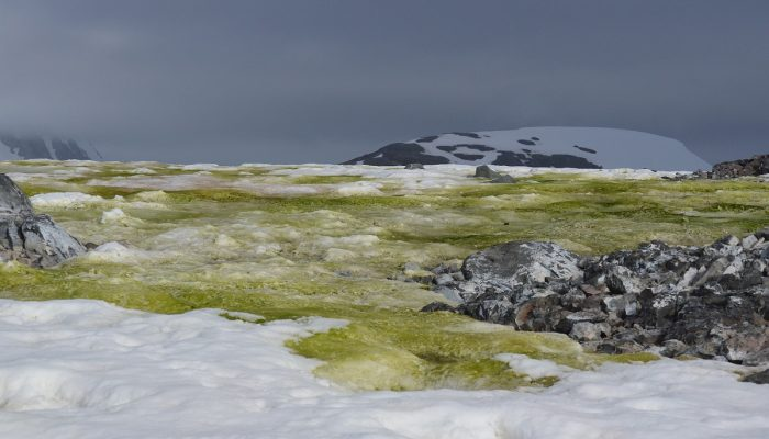 Image of the Week – Fifty shades of snow