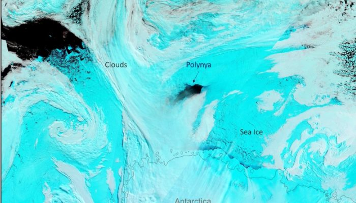 Atmospheric Rivers: A blanket for Antarctic winter sea ice