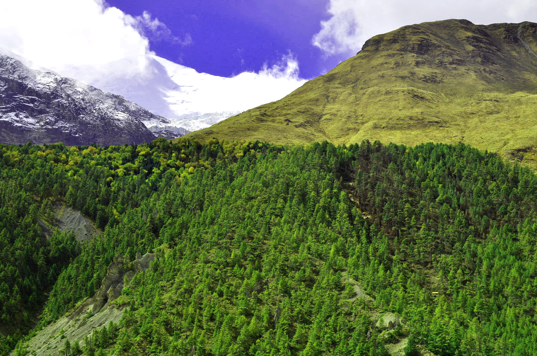 Anthropogenic treeline in Manang, Nepal, showing an abrupt transition to alpine grazing lands (Schickhoff, 24 September 2013).