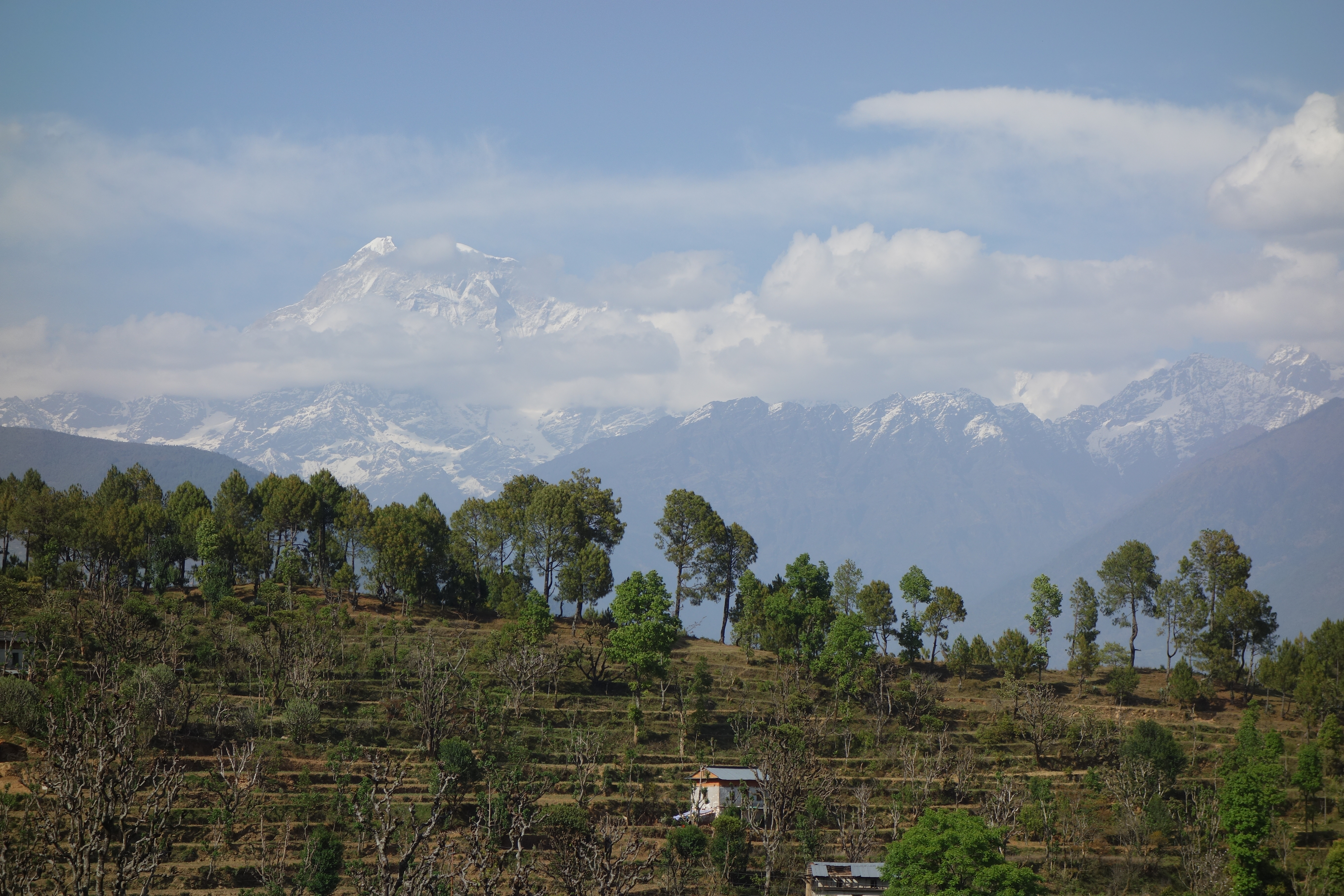 The impressive Gaurishankar, on the Nepal-Chinese border is 7.134m high and serves as eponym for the respective conservation area. Typical land use practices are shown in the foreground with terrace farming and trees used as a source of fodder. Together it represents a kind of agroforestry (by Dr. Viktor Bruckman)