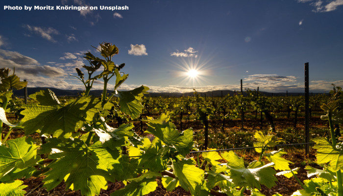 Volcanoes and Wines, Part 2