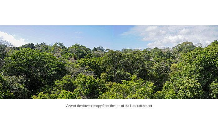 The Lutz Creek watershed of Barro Colorado Island, Panama