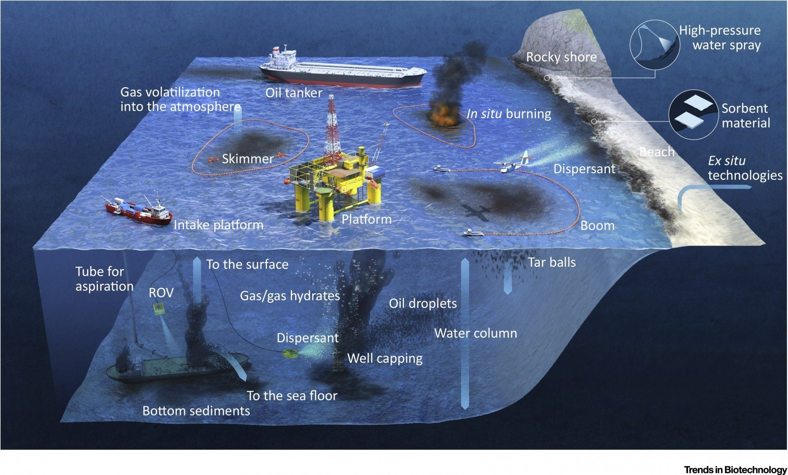 Hazard chains: from anthropic oil spills to ecosystem pollution. Can tiny organisms be the solution?