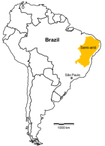 A map of south America with the northeast region of Brazil highlighted in yellow