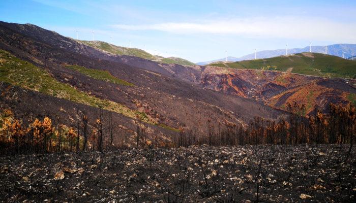 Mitigating Soil Erosion After Wildfires