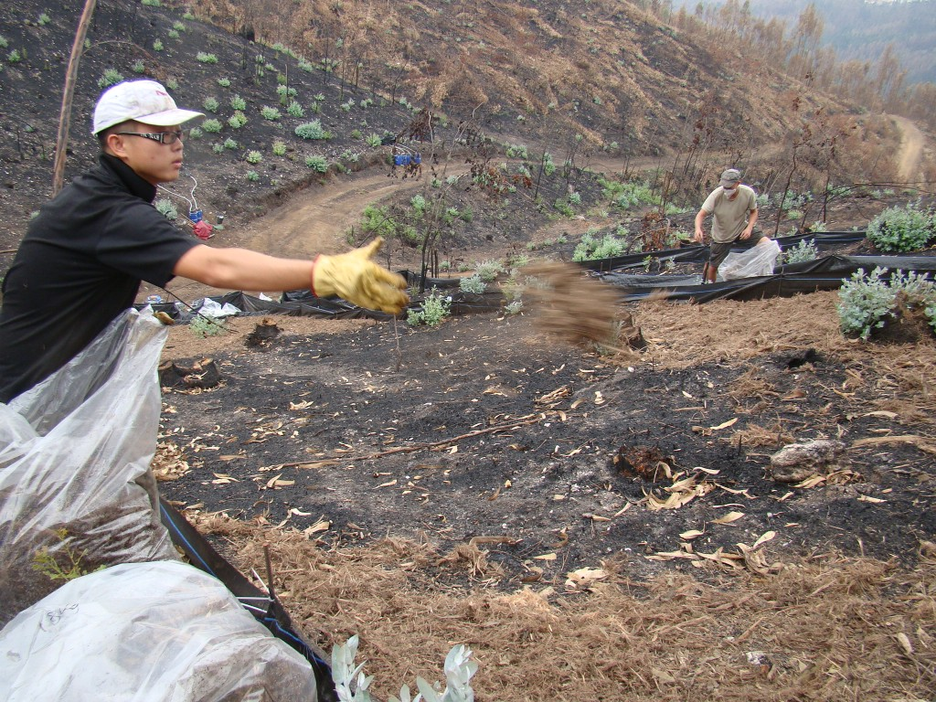 Team members spreading forest residues on the surface of burned soils.