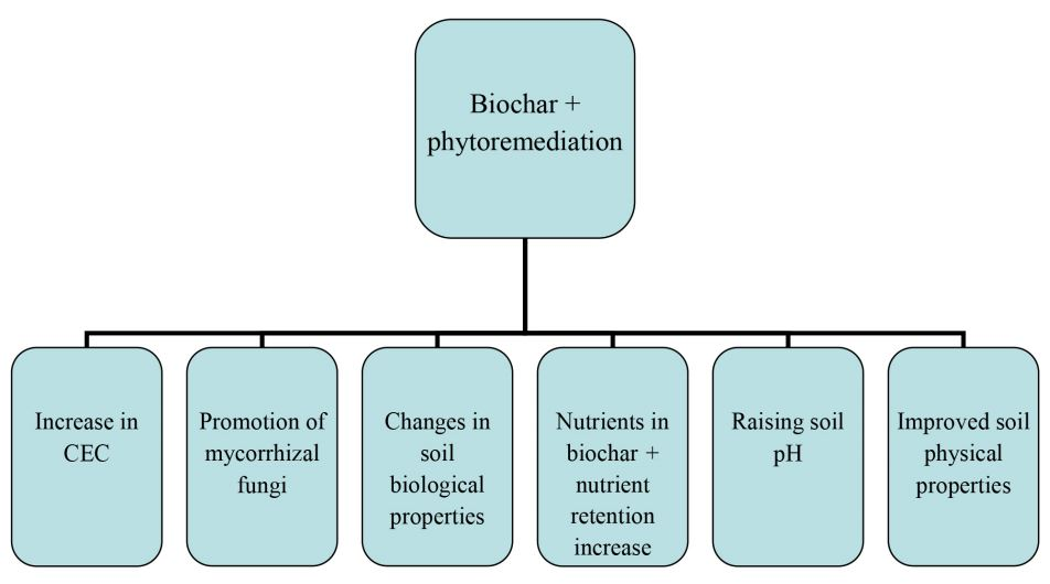 An overview of the potential positive effects attained by combining phytoremediation and biochar in heavy metal pollution remediation. Credit: Paz-Ferreiro et al. (2014).