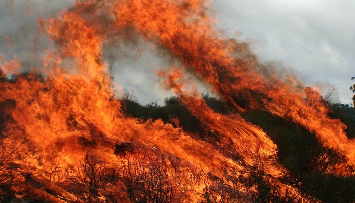 Fire and soil microorganisms: where should we focus on?