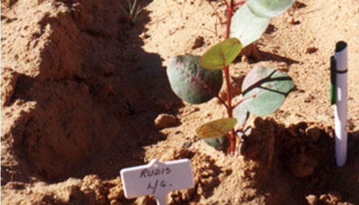 Turning unproductive soil into profits