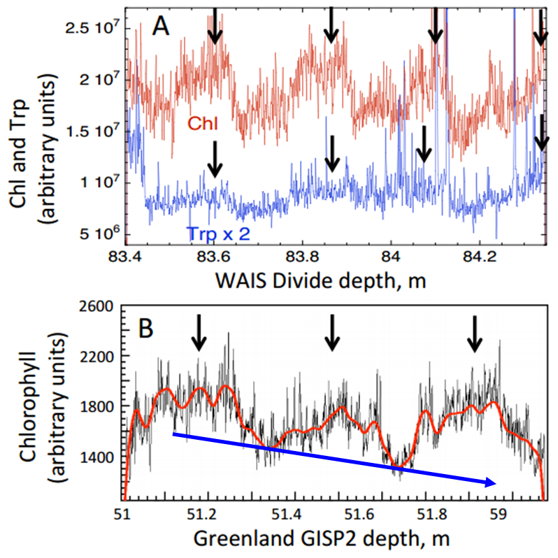 Chl autofluorescence (arbitrary units) at several depths in ice cores showing fluctuations consistent with summer-winter variations. (A) Chl and Trp over 4 yr in Western Antarctic Ice Sheet Divide ice (WAISD), summer maxima are marked with arrows; (B) Chl in Greenland ice shows maxima during 3 summers, wiggly red line is a spline fit to the data, blue arrow indicates general decrease in chlorophyll (Modified from Price and Bay 2013).