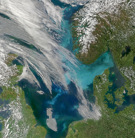 Coccolith bloom in the Skagerrak. The white calcareous shells of coccolithophores is responsible for the milky colour of this coastal water (Credit: NASA/MODIS/SeaWiFS)