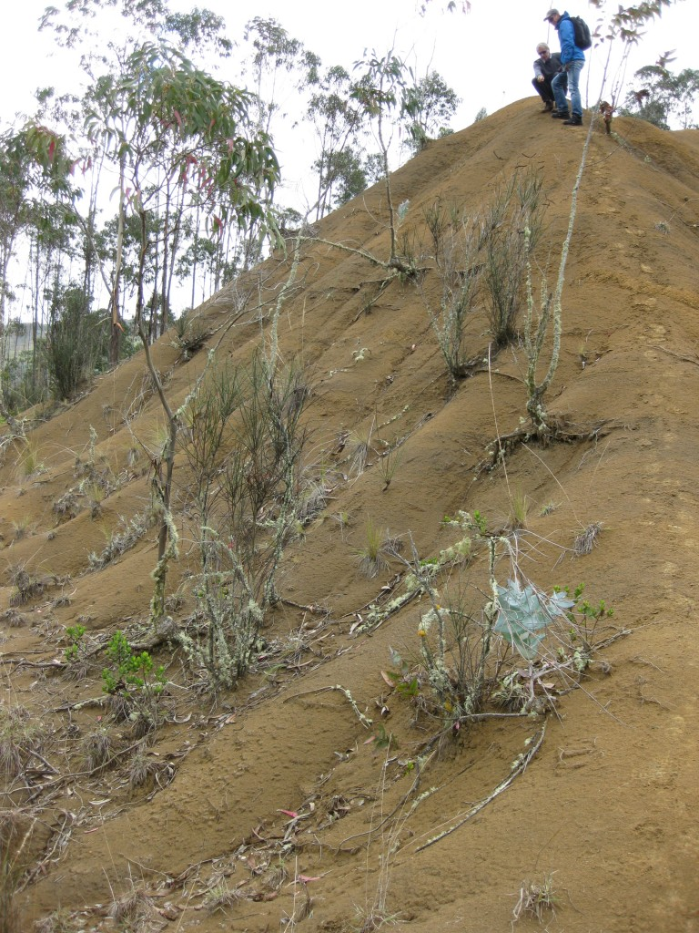 Vegetation on a degrated slope. Vegetation is a major control of runoff, erosion and sediment mobilization in highly degraded catchments. (Credit: Veerle Vanaker)