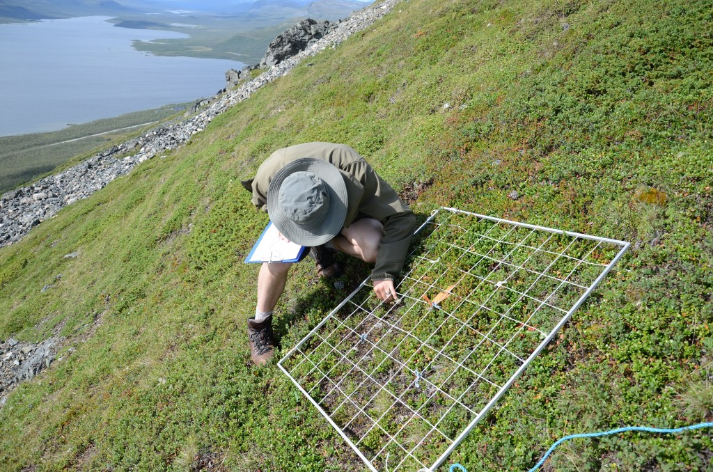 Peter le Roux surveys vegetation on the southern slopes of Saana Fell. (Credit: Liz Kalaugher)