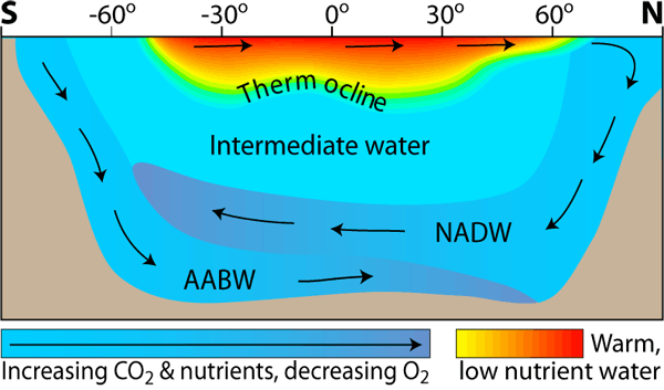 Water circulation in the Atlantic Ocean. Temperature and salinity dictate the density of a water mass and thus, its position in the water column, with warmer, fresher water at the ocean surface and colder, more saline water at depth. (Credit: SEOS)