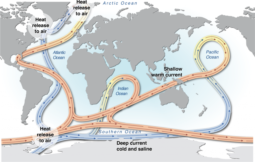 The global ocean conveyor belt. Blue indicates the movement of cold deep water masses and red indicates the warm surface currents that make up thermohaline circulation in the ocean. (Credit: UNEP)