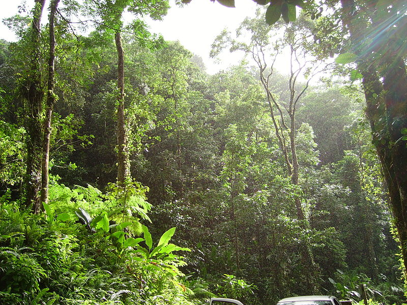 Tropical forest in Martinique. (Credit: Wikimedia Commons user Fameme)