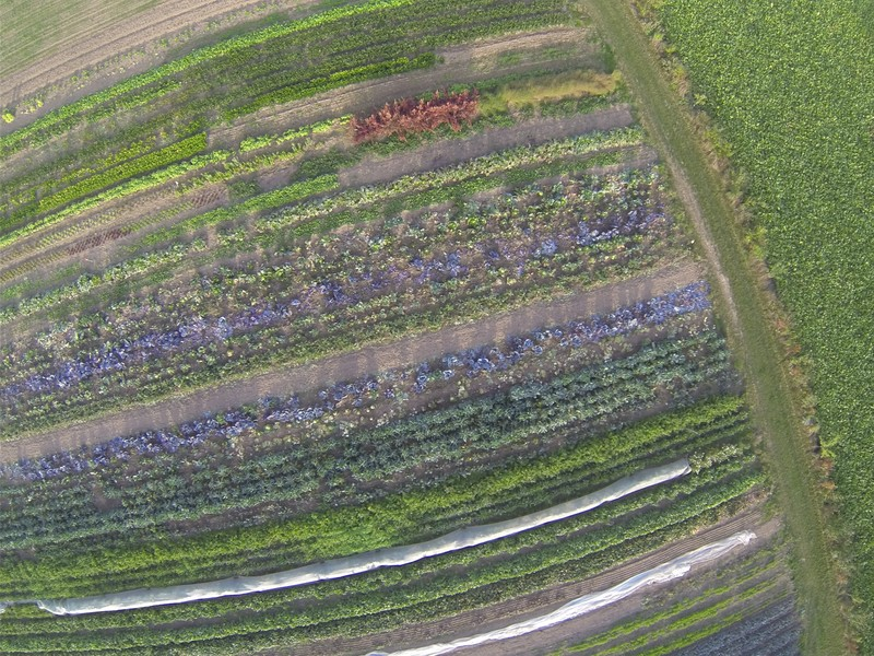 An aerial photo of an organic farm, taken from a kite! (Credit: Kristof Van Oost, distributed via imaggeo.egu.eu)