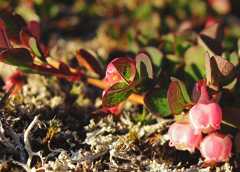 Here's a close-up! (Credit: Kim Hansen via Wikimedia Commons)