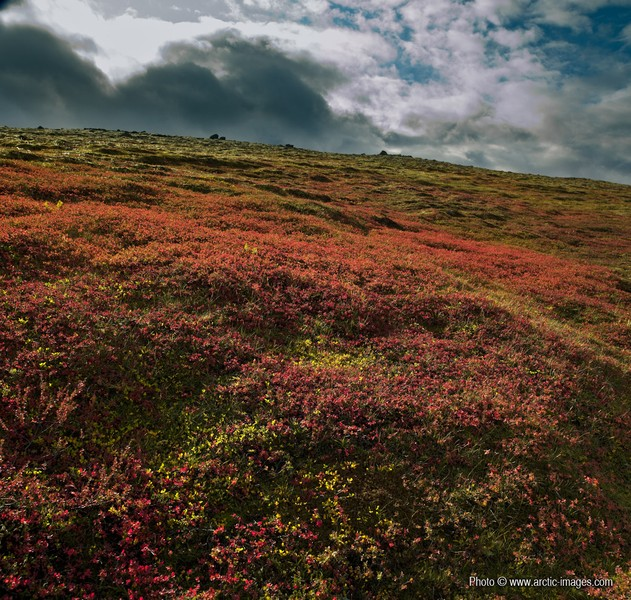 Autumn mountain vegetation, Central Highland, Iceland. (Credit: Ragnar Sigurdsson/arctic-images.com via imaggeo.egu.eu)