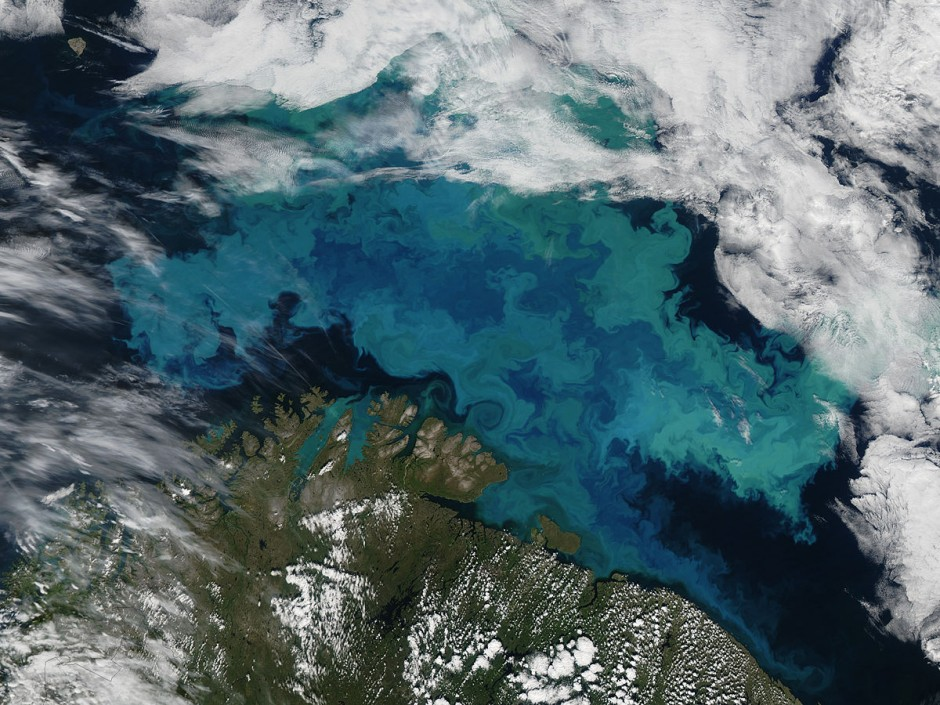 Barents Sea plankton bloom: sub-mesoscale flows may be responsible for the twisted, turquoise contours of this bloom (Credit: Jeff Schmaltz, MODIS Land Rapid Response Team, NASA GSFC)