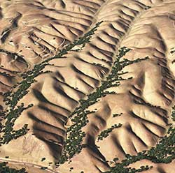 Smaller-scale patterns at the limit between river channels and hillslopes (Credit: Perron Group, MIT)
