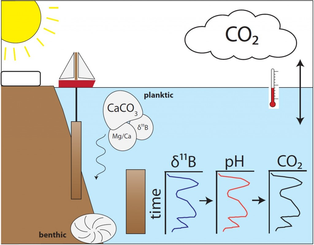 Schematic of how James use boron isotope measurements in foraminifera to reconstruct pH and CO2. Credit: James Rae