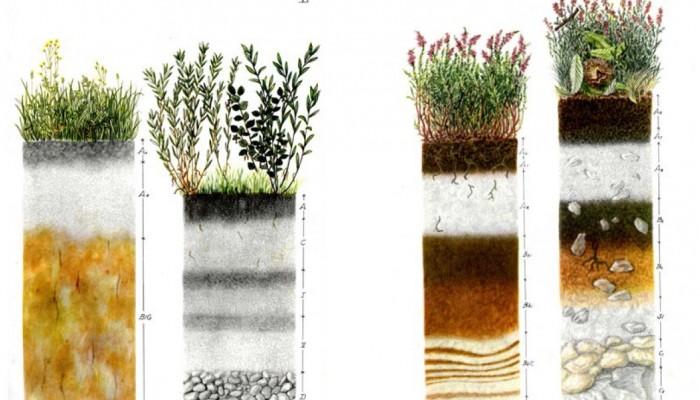 Geosciences Column: Soil in art