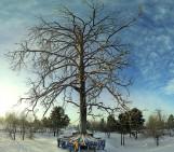Imaggeo on Mondays: Mother Tree