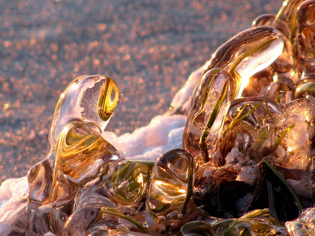 'Icebound blades of grass' . Credit: Katja Laute (distributed via imaggeo.egu.eu). A close up of blades of grass totally coated with ice. The photo was taken at sunset along the shoreline of Selbusjøen, a lake in middle Norway. The coating of the ice was built through the interplay of wave action and the simultaneously freezing of the water around the single blades of grass.