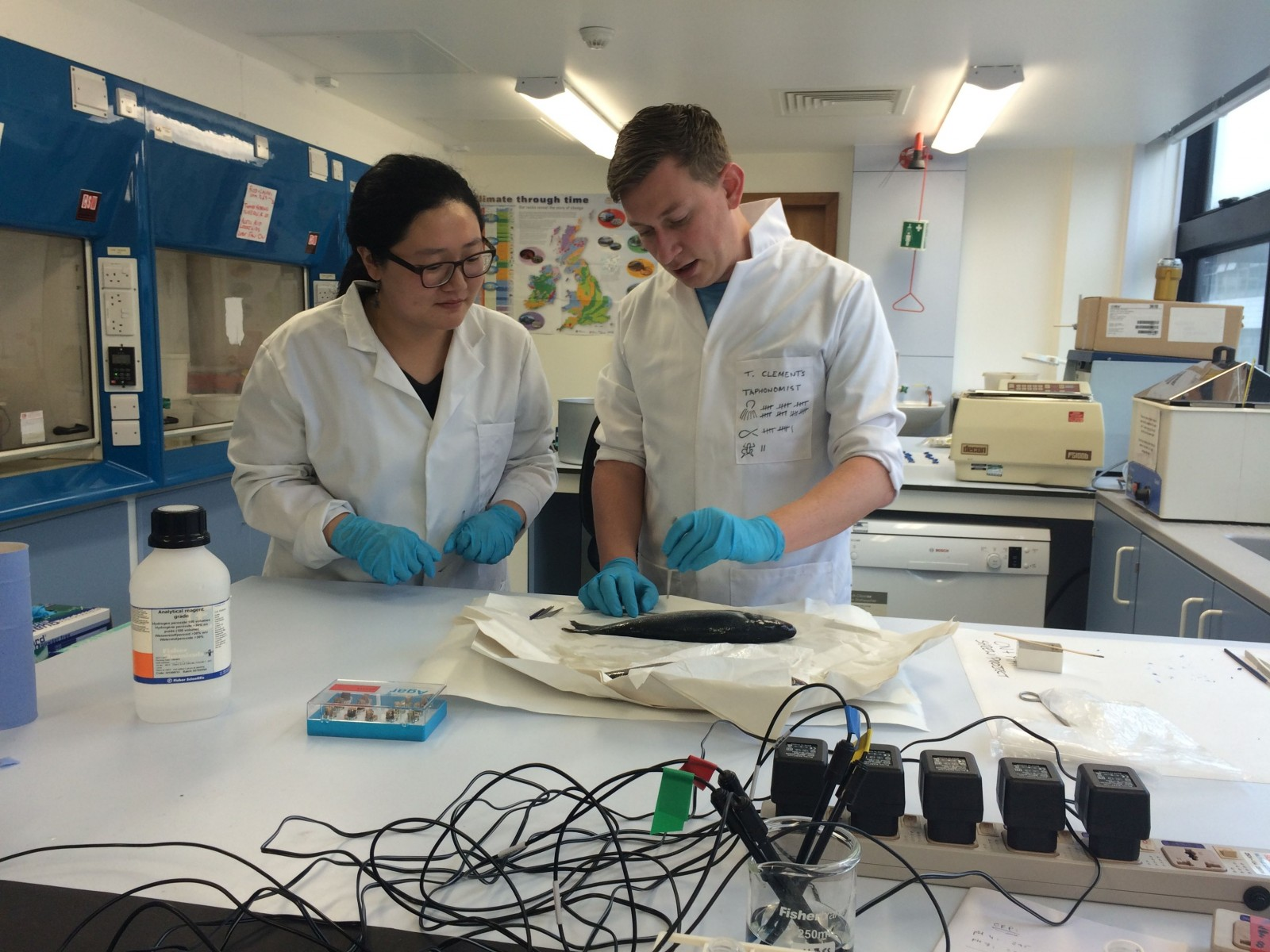 Thomas teaches visiting PhD student, Yujing Li, about the anatomy of a Seabass. (Credit: Thomas Clemens)