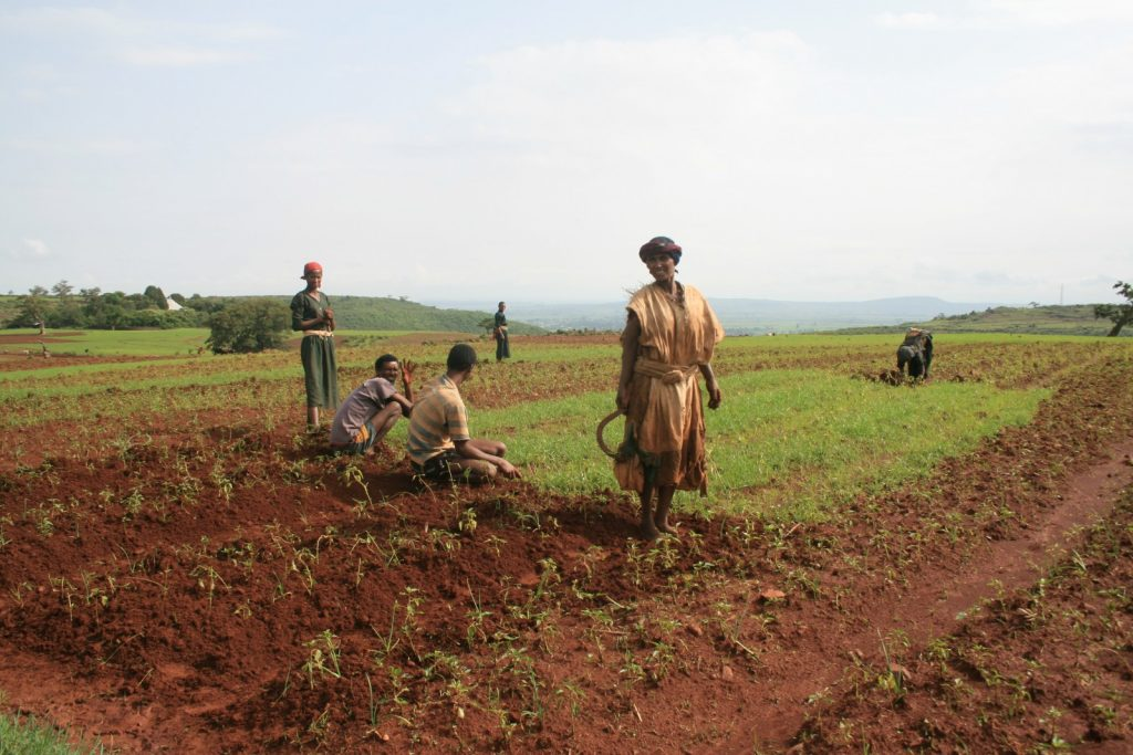 Bed planting in northern Ethiopia. Credit: Elise Monsieurs (distributed via imaggeo.egu.eu)