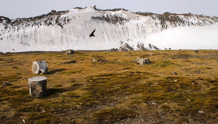 Geosciences Column: A new rock outcrop map and area estimation for the entire Antarctic continent