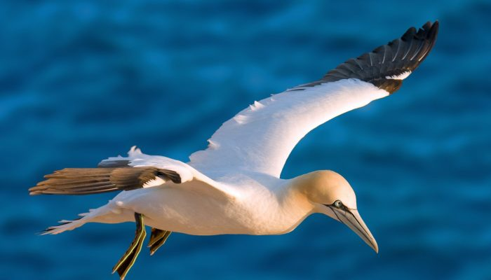 GeoSciences Column: Catch of the day – what seabirds can tell us about the marine environment