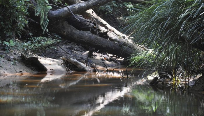 GeoSciences Column: Forests in flux – log-jams in the Amazon