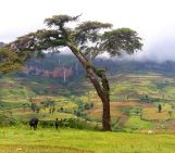 Imaggeo on Mondays: Mount Elgon, a balance between fertility and destruction