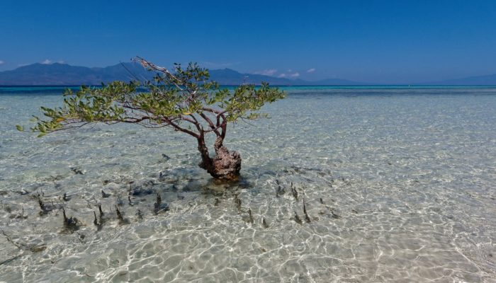 Imaggeo on Mondays: Indonesian mangroves and tsunamis