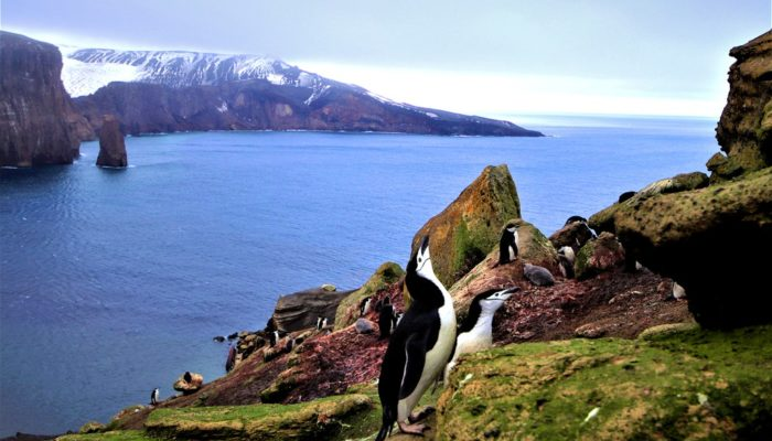Imaggeo on Mondays: Penguins – a biogeochemical link between sea and land