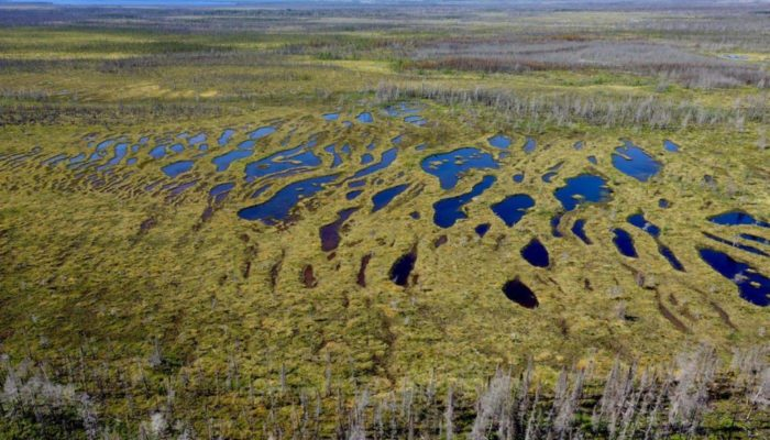 The Carbon Potential of Peat