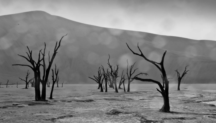 Imaggeo on Mondays: Rain on the Namib Desert