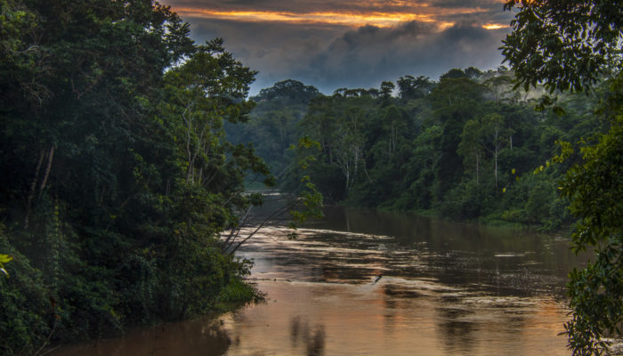 Don't leaf it to the trees: Amazonian soils also work to store carbon.