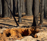 Imaggeo On Monday: Burnt roots