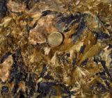 Imaggeo On Monday: Hedenbergite – Ilvaite skarn, Calamita, Island of Elba